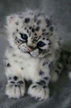snow leopard cub copy