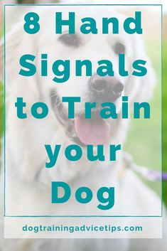Love Pet, I Love Dogs, Hand Signals, Dog Information, Cute Funny Dogs, Dog Behavior, Dog Training Tips, Dog Days, Pet Care