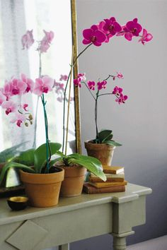 Pink Orchids - in the language of flowers, orchids mean beauty, thoughtfulness snf fertility