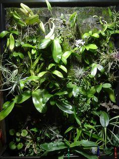 mur végétal orchidée