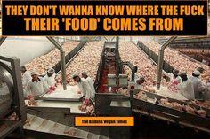#vegan #animalrights