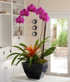 3 Youthful Clever Tips: Artificial Plants Indoor Silk Flowers artificial grass etsy.Artificial Plants Indoor Silk Flowers how to lay artificial grass. Orchid Planters, Orchid Pot, Orchids Garden, Garden Plants, Small Artificial Plants, Artificial Flowers, Orchid Arrangements, Silk Plants, Potted Plants
