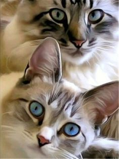 Cute Cats And Kittens, Cool Cats, Kittens Cutest, Pretty Cats, Beautiful Cats, Animals Beautiful, Gorgeous Eyes, Pretty Girls, Animals And Pets