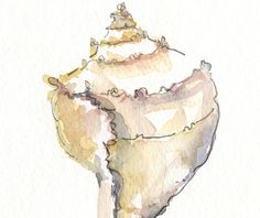 Conch Shell Watercolor Illustration