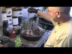 Tips & Tools for Potting Succulents, with Gary Bartl - YouTube