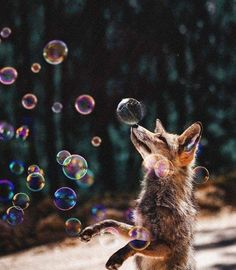 Soo cute, fox playing with bubbles Animals And Pets, Baby Animals, Funny Animals, Cute Animals, Beautiful Creatures, Animals Beautiful, Fuchs Illustration, Fantastic Fox, Pet Fox
