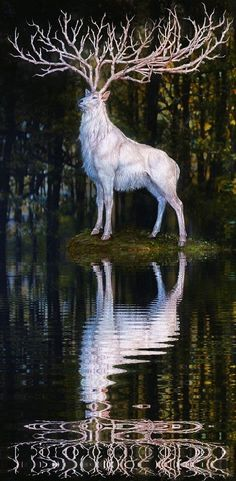 Since always White Deer deal, with great kindness, to drive ordinary mortals to the doors leading enchanted realms