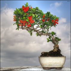 Nice idea for a background to photograph my bonsai.I really love the look of Bonsai trees.Please check out my website thanks. www.photopix.co.nz