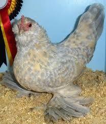 Image result for porcelain Mille Fleur d'Uccle chicken