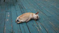 somebody's tired