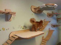Muebles para gatos