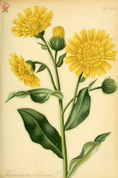 (100)  Немного ботаники -