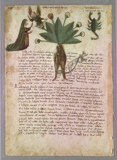 Science Illustration, Botanical Illustration, Historia Natural, Poisonous Plants, Medieval Manuscript, Reference Images, Botanical Prints, Herbalism, History
