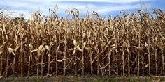 Kentucky: 3 Counties Declared Drought Disaster Areas