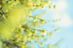 /by *setsuna #flickr #japan #flowers