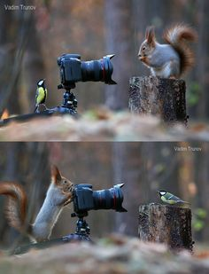 squirrel photography: cute squirrel and bird