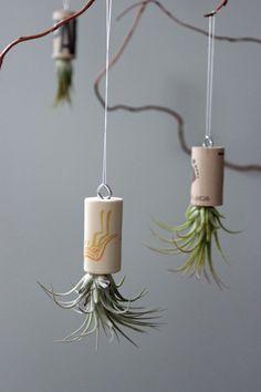 Planta corcho ornamento en vivo / / Living Art / / planta de aire única decoración