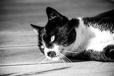 Cat looking with majestic eyes. Photography Portfolio, Eyes, Animals, Animales, Animaux, Animal, Animais, Cat Eyes