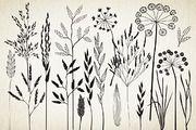 Botanical elements. More than 68! - Illustrations - 3