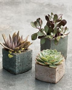 hypertufa containers made from milk cartons for individual succulents