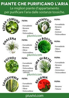 Dracena Marginata, Sansevieria Trifasciata, Interior Garden, Natural Home Remedies, Plant Care, Go Green, Things To Know, Indoor Plants, Eco Friendly