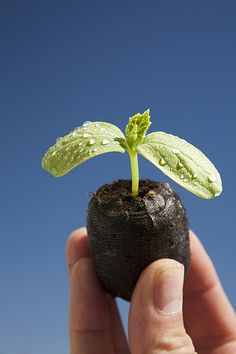 Seedling - nurture and growth