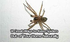 Keep Spiders out of home