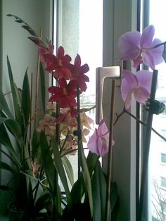 Gruppe Plants, Group, Orchids, Plant, Planting, Planets