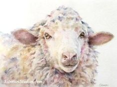 """""""Sunny Sheep"""", watercolor sheep painting by animal artist Teresa Silvestri.  Original sold, but fine art prints & cards available.  Photo reference thanks to Karen Corrie."""