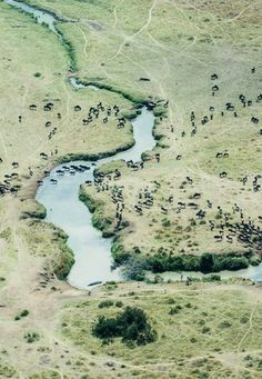 The Great East African Safari Experience