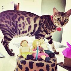 Daily doses of original, cute, cat photos & videos. Exotic Cats, Bengal, My Family, Neko, Cats Of Instagram, Cute Animals, Creatures, Inspiration, Pride
