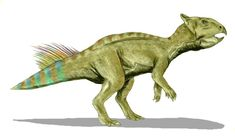 Cerasinops (meaning 'cherry face') was a small ceratopsian dinosaur. It lived during the Campanian of the late Cretaceous Period. Its fossils have been found in Two Medicine Formation, in Montana.