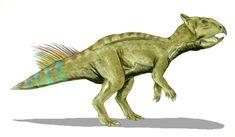 Cerasinops hodgskissi. Dinosauria, Ornithischia, Cerapoda, Marginocephalia, Ceratopsia, Neoceratopsia. Auteur : Nobu Tamura, 2007.
