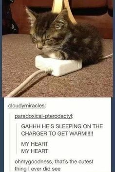 funny memes featuring cute creatures of all kinds. Animals can be cute and fun, and these memes are proof of it! Funny Animal Memes, Cute Funny Animals, Cute Baby Animals, Cat Memes, Funny Cute, Cute Cats, Animals And Pets, Crazy Cat Lady, Crazy Cats