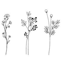Flower Drawing Discover Set of doodle flora wild and nature flowers on Vector Image Simple Flower Drawing, Floral Drawing, Simple Flowers, Flower Art, Flora Flowers, Drawing Flowers, Easy To Draw Flowers, Flower Design Drawing, Flower Drawing Images
