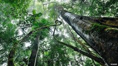 Carbohydrates boost trees' drought survival chances.