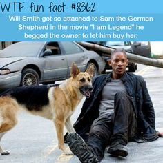 I am Legend WTF fun facts. Sam was a great dog! Wtf Fun Facts, Funny Facts, Funny Memes, Hilarious, Random Facts, Gi Joe, I Am Legend, Movie Facts, Animal Facts