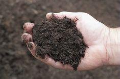 Hubert Fontaine vous aide à faire votre choix parmi toutes les variétés de terreau présentes sur le marché.