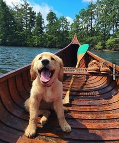 Golden retriever pup AND a cedar canoe? Sign me up!