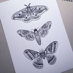 I want a moth tattoo! Strichpunkt Tattoo, Shin Tattoo, Piercing Tattoo, Piercings, Tattoo Sketches, Tattoo Drawings, Body Art Tattoos, Tatoos, Ink Tattoos