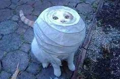 29 Cats Who Failed So Hard They Won. oh my god i dont think ive ever laughed so hard