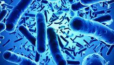 Talajbaktériumok szerepe és hatásai | AGRO.bio Hungary Kft.