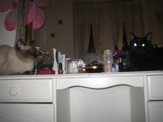 ..his favourite spot on his mummy's dressing table..