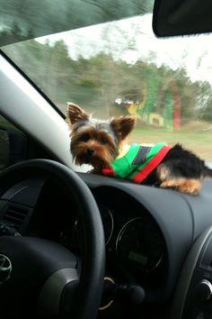 Turbo gettin his Christmas on.