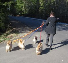 walking 4 dogs, 3 on the UTurn handle, one on a separate (4th) leash