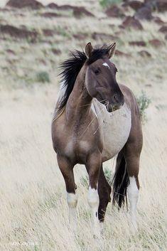 Wild Horses byKEN ARCHER  http://kenarcherphotos.com/
