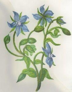 Balandžio 14 diena. Balandžio 14 dienos gėlė, šventės ir vardadieniai. Balandžio 14 dienos darbai sode ir darže.