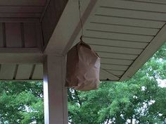 Keep Wasps away with a brown paper bag. The wasps and yellow jackets see it and think it's a hornet's nest and they avoid it