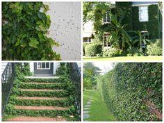 Decore o muro da sua casa com plantas trepadeiras e arbustos - Jardim das Ideias STIHL