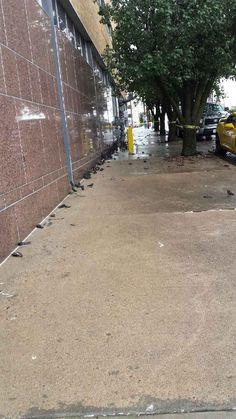 Dozens of birds found dead in downtown Tulsa, OK